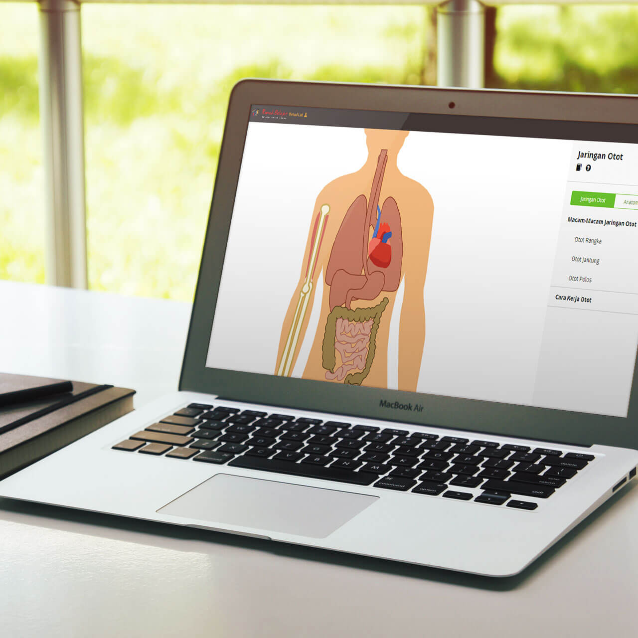 Interactive Virtual Laboratory: Muscle Tissue